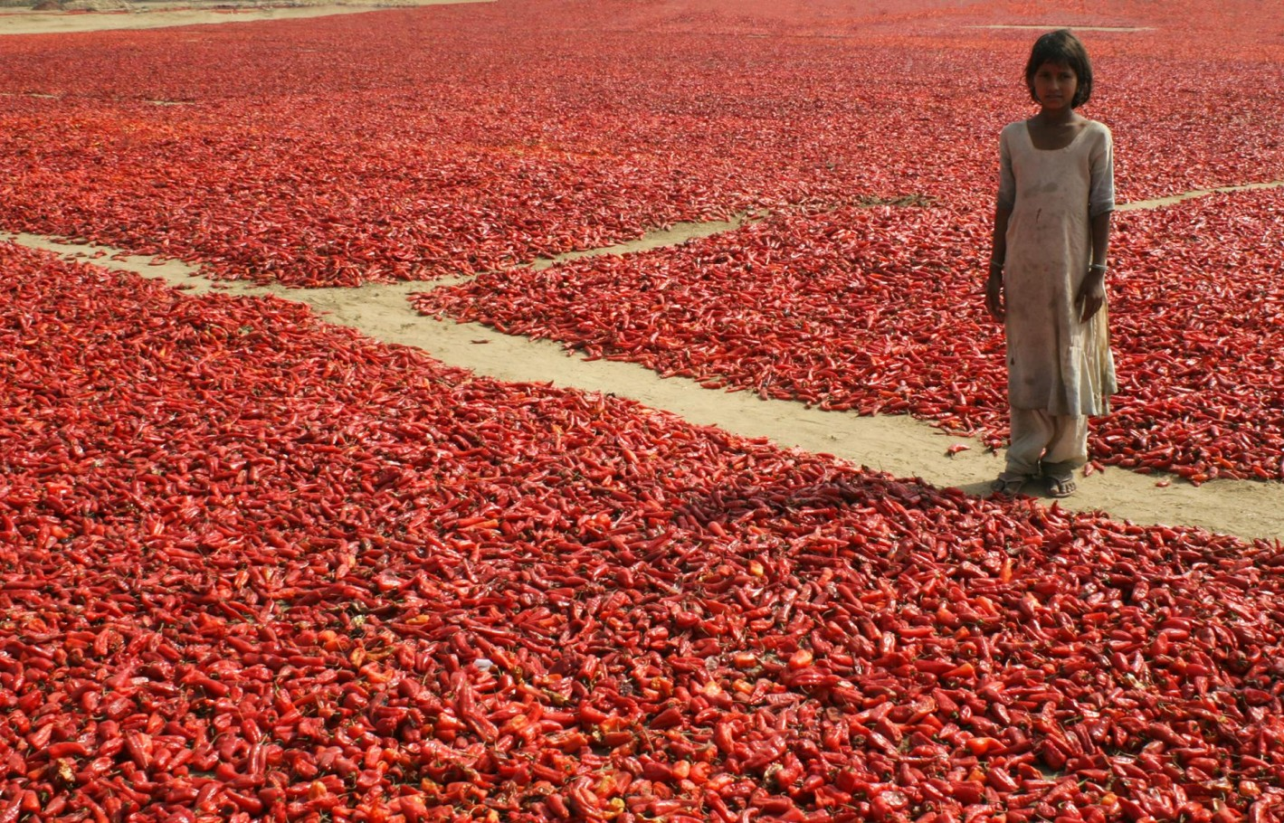 Girl with chilli harvest, India