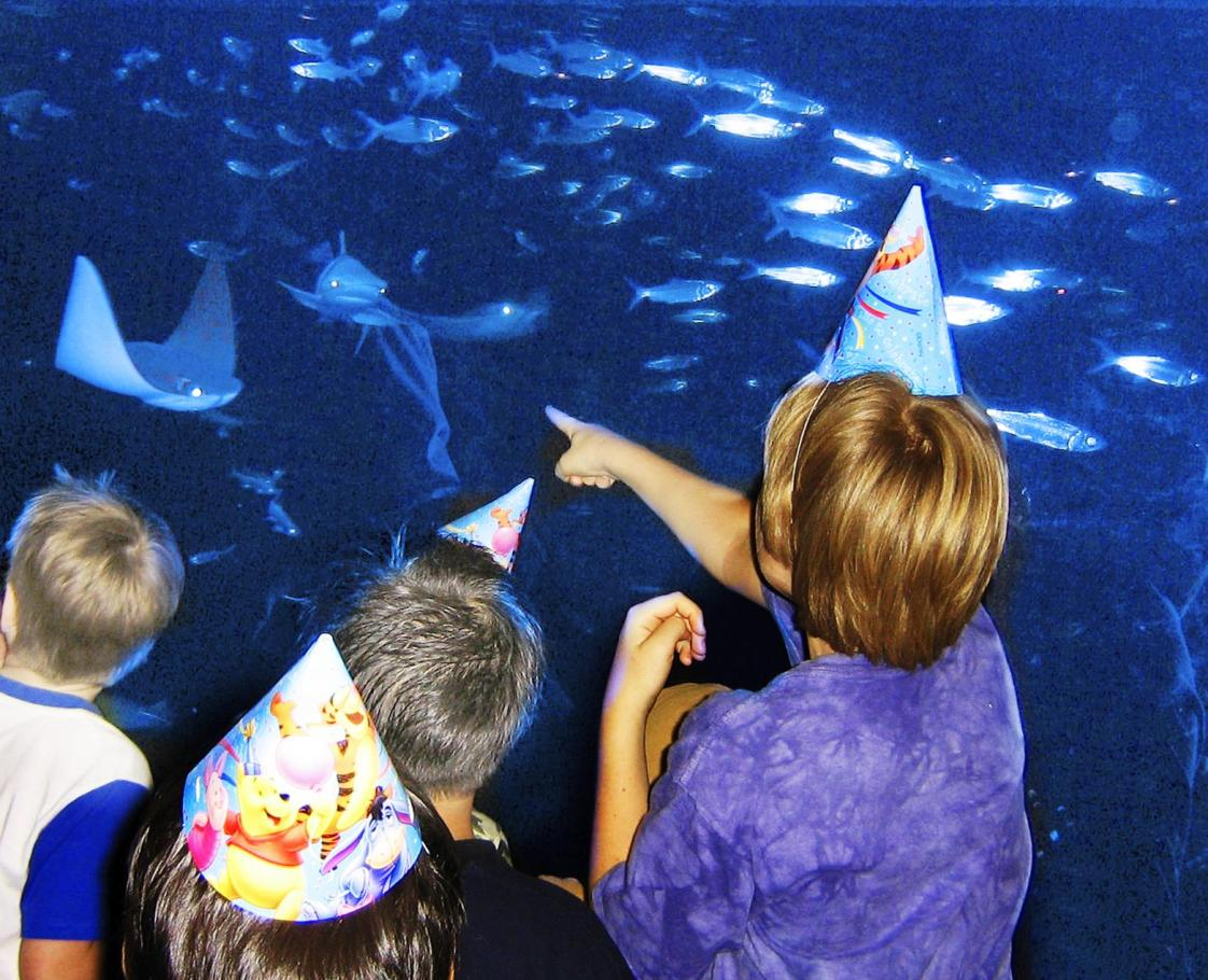 Party at the Aquarium